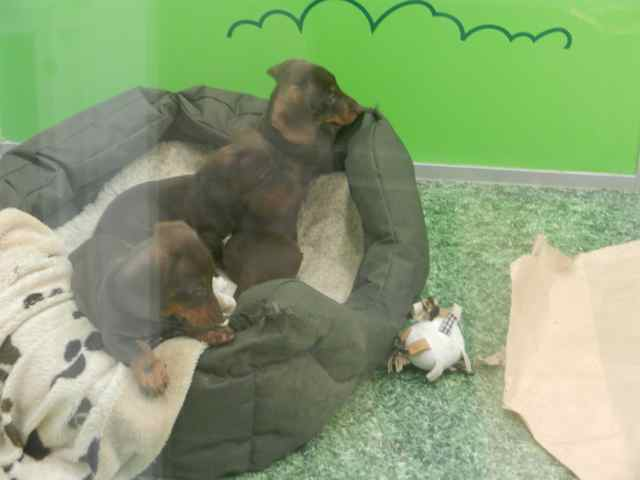 Back to school for A family pet salon