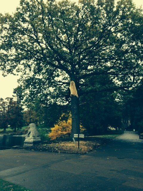 Verdun oak
