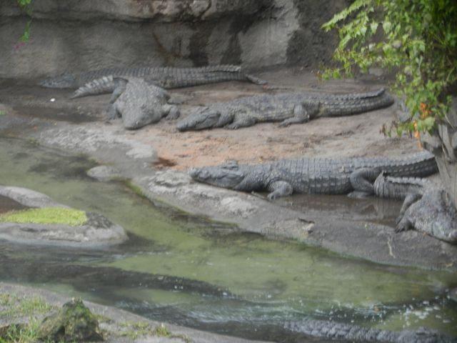 at Animal Kingdom Safari