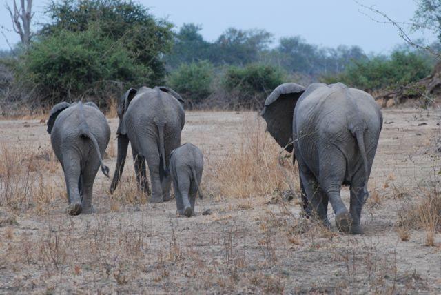 my elephants
