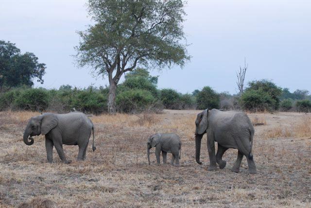 plus one elephant