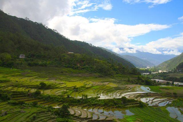 Bhutan paddy fields