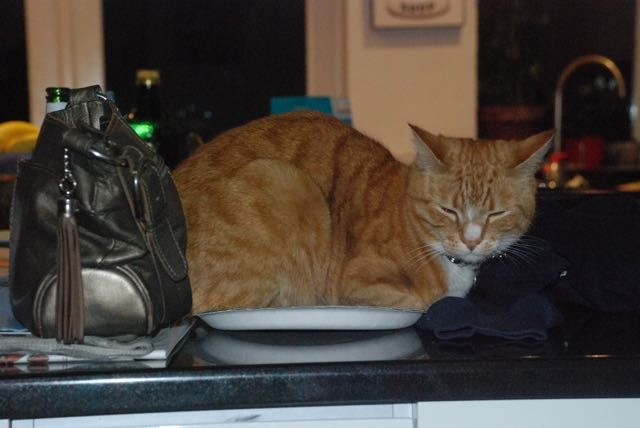 cat on a plate