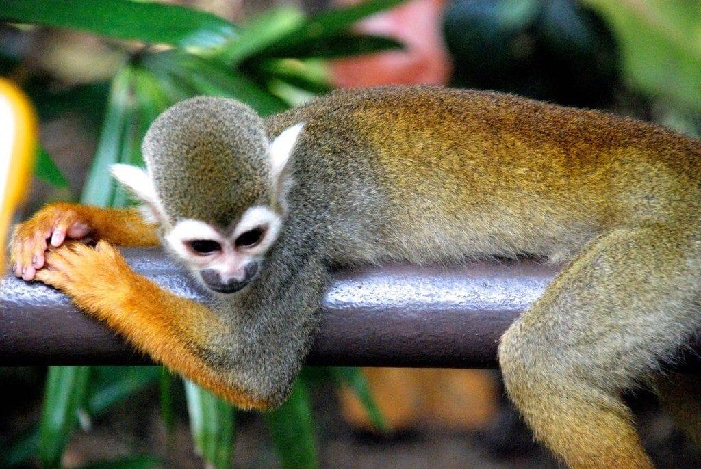 River quest monkey 2