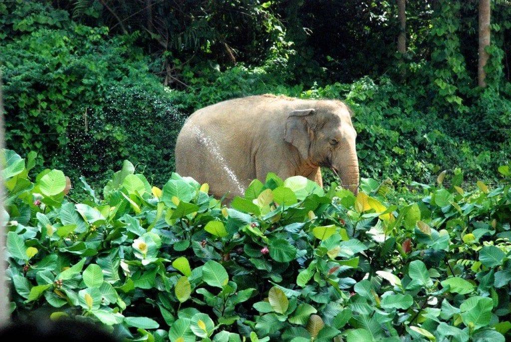 river safari elephant