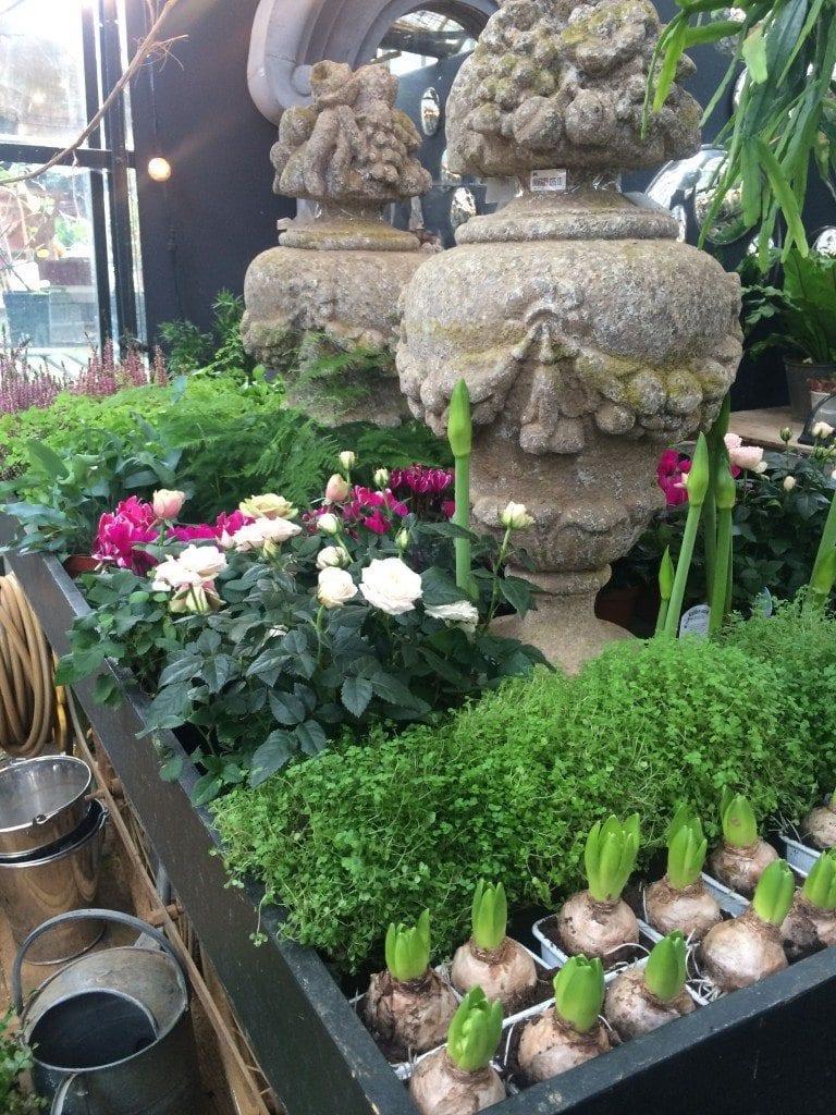 Bday Petersham flowers