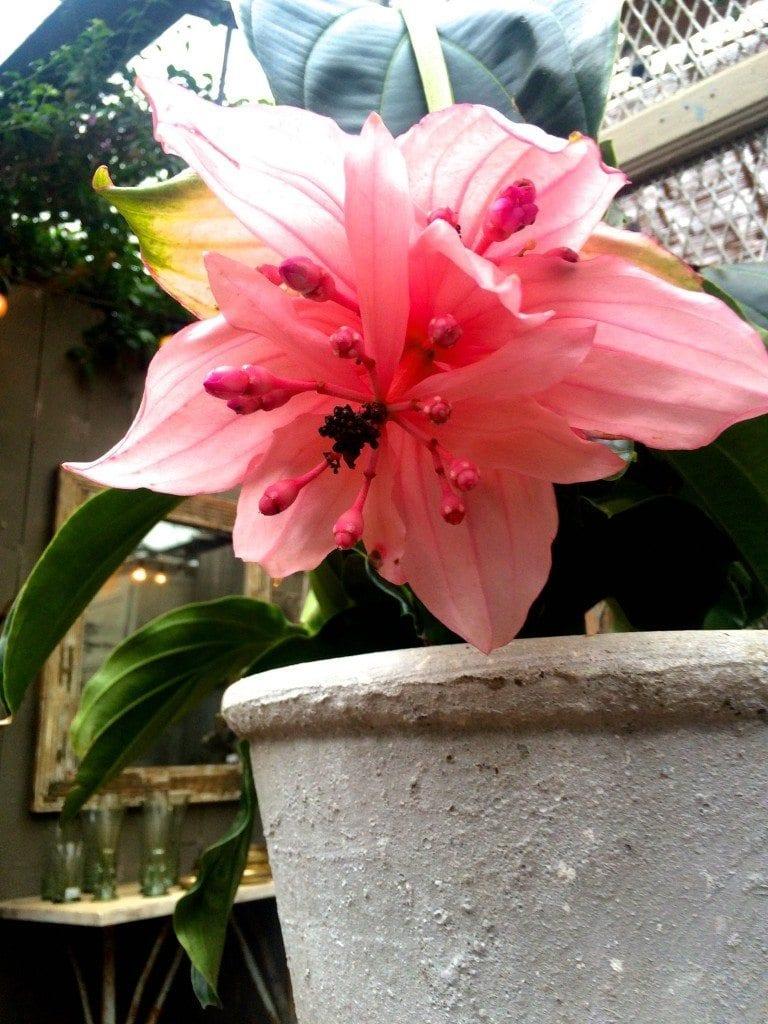 bday Petersham flower