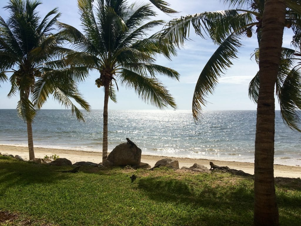 Day view from room with iguanas