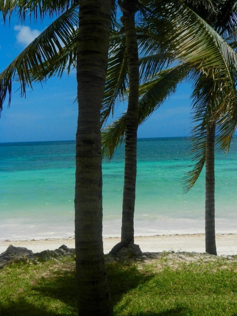 Palm tree colours