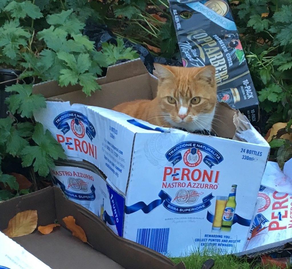 Cat in a peroni box