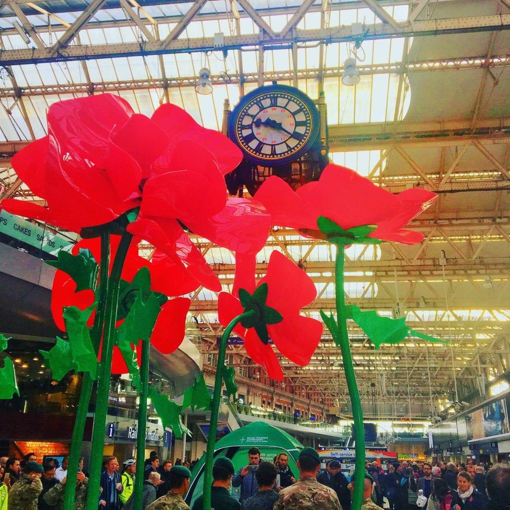 Tall poppies at Waterloo