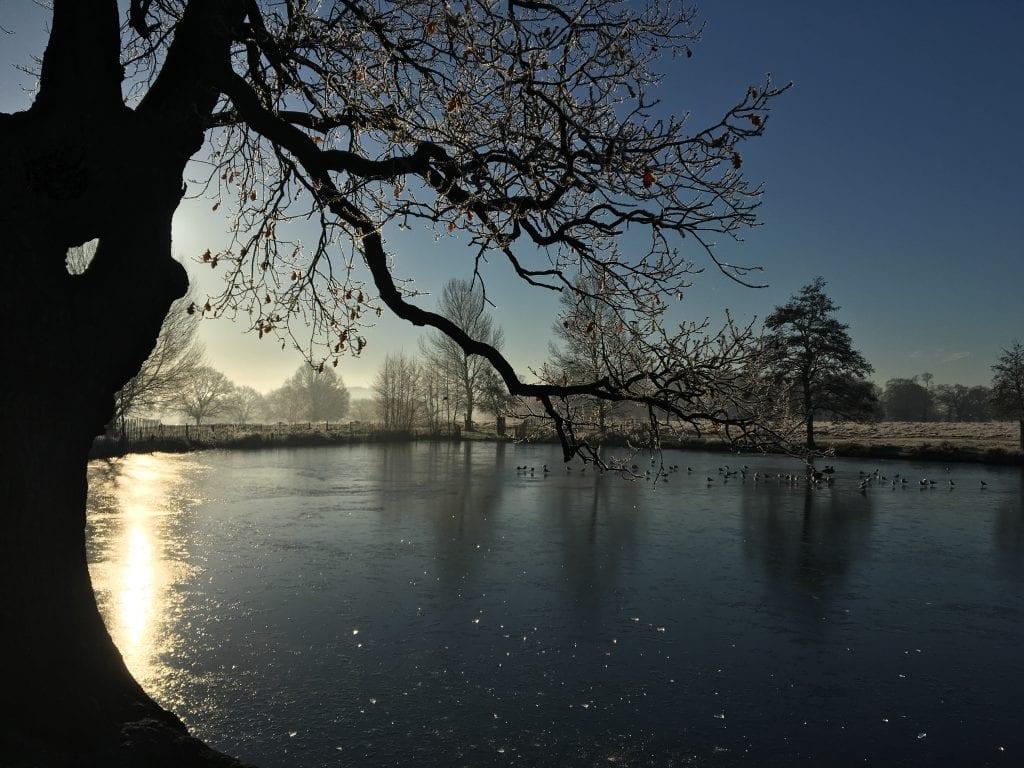 Adams pond