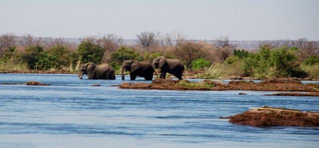 3 elephants at the Victoria Falls
