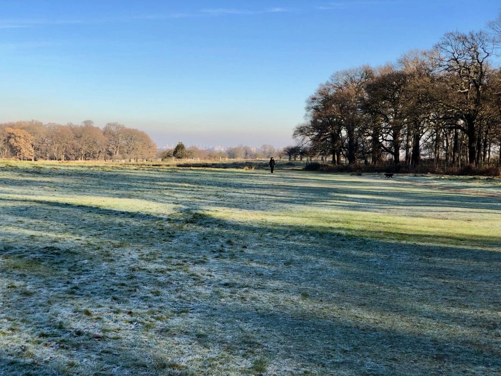 Richmond Park frost