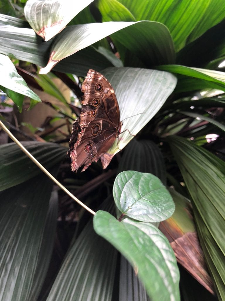 Wisley butterflies