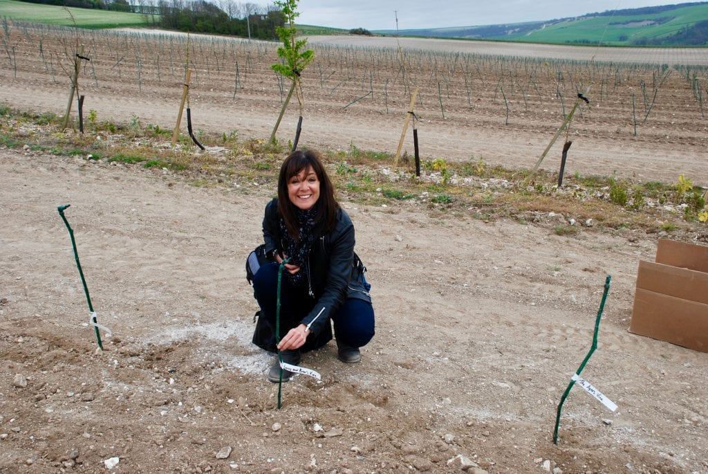 Planting first vines at Rathfinny